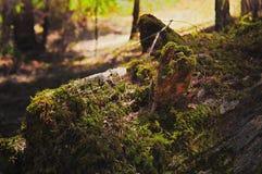 zielona natury Fotografia Stock