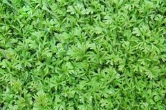 zielona natury Fotografia Royalty Free