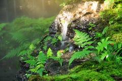 zielona natury Zdjęcia Royalty Free