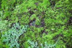 zielona natury Obraz Stock