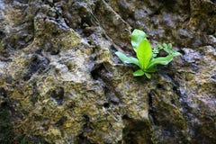 zielona natury Obrazy Stock