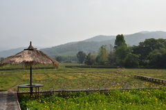 zielona natury Zdjęcie Royalty Free