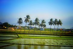 Zielona natury sceneria z niebieskim niebem Zdjęcia Stock