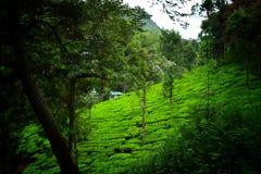Zielona natury sceneria z niebieskim niebem Zdjęcie Stock