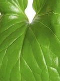 zielona nowa roślina Obrazy Stock