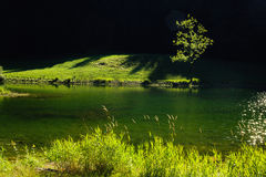 Zielona oaza Obrazy Royalty Free