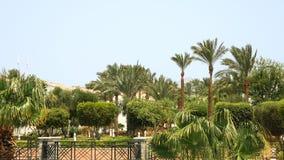 Zielona oaza po środku pustyni Obrazy Stock