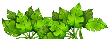 Zielona obfitolistna roślina Fotografia Royalty Free