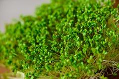 zielona obramiająca zdjęciu poziomo roślinnych Fotografia Stock