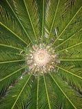 zielona obramiająca zdjęciu poziomo roślinnych Fotografia Royalty Free
