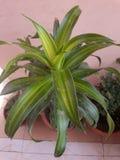 zielona obramiająca zdjęciu poziomo roślinnych Zdjęcie Royalty Free