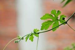 zielona obramiająca zdjęciu poziomo roślinnych Zdjęcia Stock