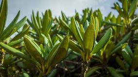 zielona obramiająca zdjęciu poziomo roślinnych Obrazy Royalty Free