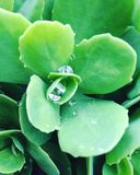 zielona obramiająca zdjęciu poziomo roślinnych Obrazy Stock