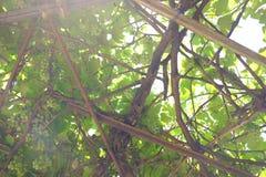 zielona obramiająca zdjęciu poziomo roślinnych Zdjęcie Stock