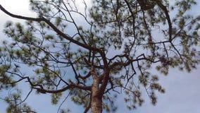 zielona obramiająca zdjęciu poziomo roślinnych Zdjęcia Royalty Free