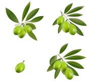zielona oliwka Obraz Royalty Free