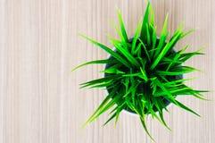 Zielona organicznie pszeniczna trawa przeciw Zdjęcia Stock