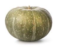 zielona pączuszku Obraz Royalty Free