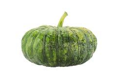 zielona pączuszku Zdjęcia Royalty Free