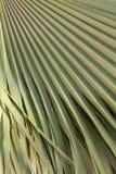 Zielona palmowego liścia tekstura Obrazy Royalty Free