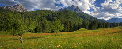 zielona panorama Fotografia Royalty Free