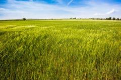 Zielona panorama Zdjęcia Stock