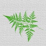 Zielona paproć liścia tekstura fotografia stock