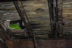 zielona paproć w fabryce obraz stock