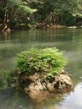 Zielona paproć na skale w zielonej zatoczce Obrazy Stock