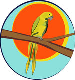 zielona papuga Fotografia Royalty Free