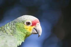Zielona papuga w bokeh i dzikim zdjęcie stock