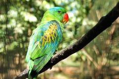 Zielona papuga w tropikalnym ogródzie Zdjęcia Royalty Free