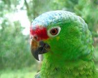 Zielona papuga z naturalnym backround fotografia royalty free