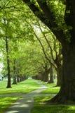 zielona parkowa ścieżka Zdjęcie Royalty Free