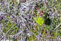 Zielona piękna roślina Zdjęcia Stock