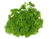 zielona pietruszka zdjęcia royalty free