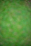 Zielona plama od drzewnego tła dla wallpeper Fotografia Royalty Free