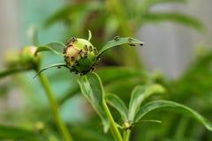 Zielona planeta mrówki zdjęcia royalty free