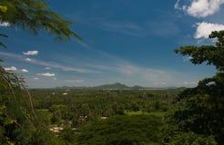 Zielona plantacja i niebieskie niebo Obrazy Stock