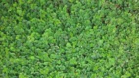 Zielona podłoga Zdjęcie Stock