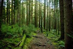 zielona podróż Fotografia Stock