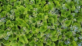 Zielona pokrywa Zdjęcie Royalty Free