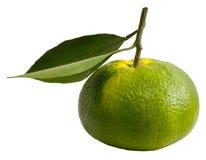 Zielona pomarańcze Fotografia Royalty Free