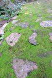 zielona przestrzeni Fotografia Stock