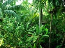 zielona przyjemna scena Zdjęcia Stock