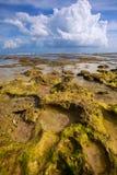 Zielona rafa przy niskim przypływem obraz stock
