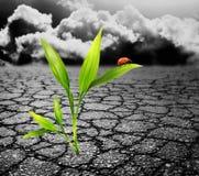 zielona roślina fotografia stock