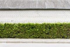 Zielona roślina i biały ściana z cegieł tło obraz stock