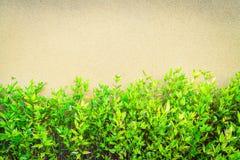 Zielona roślina na ścianie Obrazy Stock